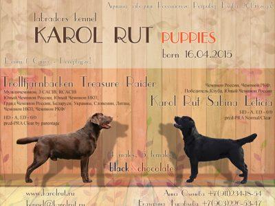 презентация щенков лабрадора керол рут